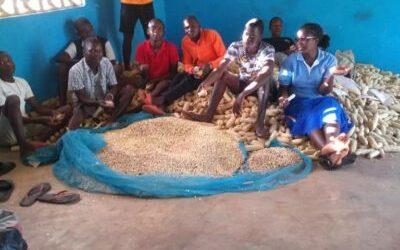 Hilfe zur Selbsthilfe – reichhaltige Maisernte